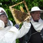initiation_apiculture_bourgogne_yonne_proche_paris_montagne_aux_alouettes