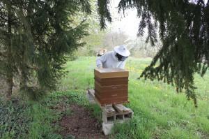initiation_apiculture_bourgogne_yonne_montagne_aux_alouettes